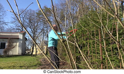 man prune hedge clippers