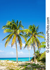 Sandy beach with palm trees, Caribbean Islands - Amazing...