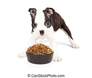 Hungry Puppy Over Bowl of Food