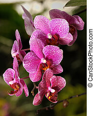 "Orchids - Tropical flowers in the park ""Utopia\"", Israel."