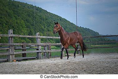 running horse ranch - Running horse racing