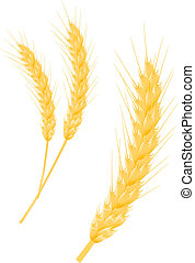 Wheat ears as agriculture symbols