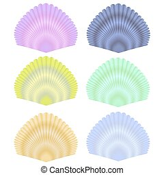 Seashell Collection - Natural Seashell Collection Isolated...