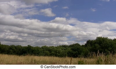 Small airplane landing - Small airplane flying above bushes...