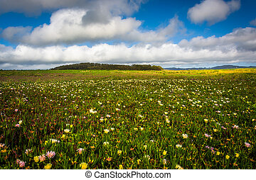 Flowers in a field in Pescadero, California