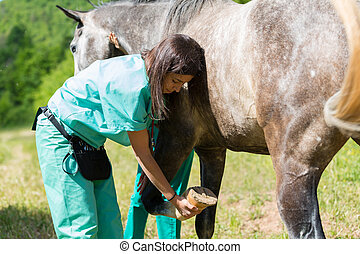 Veterinary on a farm - Veterinary great performing a scan to...