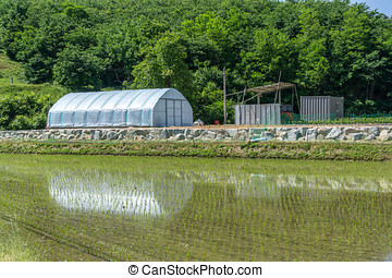 small green house by the rice field - a small green house in...