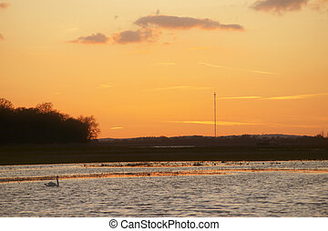 Swan at sunset - A swan swims during a sunset on a river...