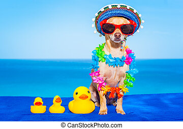 summer vacation dog - chihuahua dog with family of plastic...