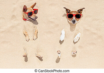 couple of dogs buried in sand - couple of two dogs buried in...