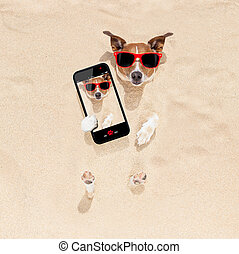 dog buried in sand selfie - jack russell dog buried in the...
