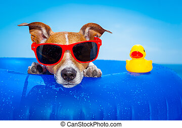 summer holiday dog - jack russell dog on a mattress in the...