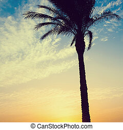 Silhouette of palms during sunrise