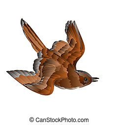 Bird sparrow in flight vector.eps - Bird cub sparrow passer...