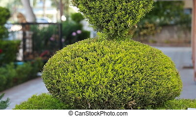 green bush in heart shape standing in - line nature...