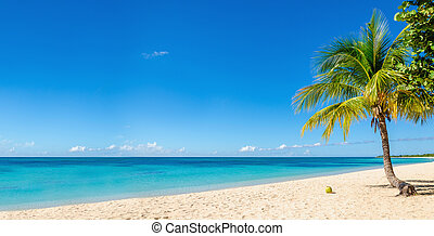 Sandy beach with coconut palm, Caribbean Island - Amazing...