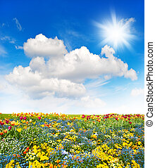 Flower meadow and green grass field over cloudy blue sky...