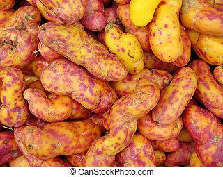 peruano,  olluquito, tubérculo, rojo