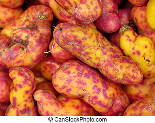 Red Olluquito Peruvian tuber for sale at the Farmers Market