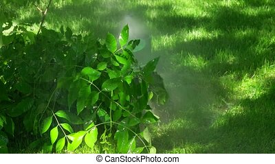 Auto sprinkler on a sunny summer day during watering