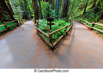 Two paths lead to different directions - A walking path in a...