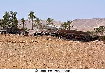 Bedouin tent in Israel - Bedouin tent in oasis in the Judean...