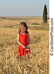 Girl collects wheat from the field for Shavuot Jewish Holiday