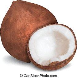 Cliparts et illustrations de noix coco 11 865 graphiques - Dessin noix de coco ...
