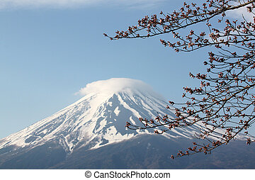 Mount Fuji and sakura not blossom - Mount Fuji and sakura...