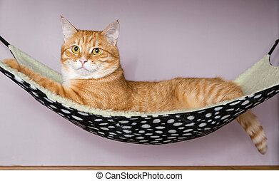 Red cat lying in a hammock - Happy ginger cat lying in a fur...