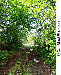 Forest road - The forest road in the summer time