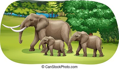 Elephants family walking through the forest field