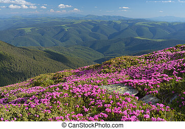 Mountain flowers - Mountain landscape with pink flowers...