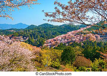 Yoshinoyama, Japan in Spring - Yoshinoyama, Nara, Japan...