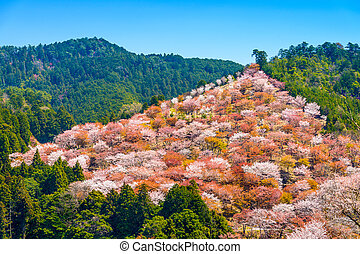 Yoshinoyama, Japan in Spring - Yoshinoyama, Nara, Japan...