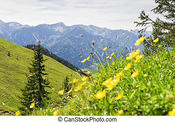 Breitenstein Bavaria Alps - Landscape on the mountain...