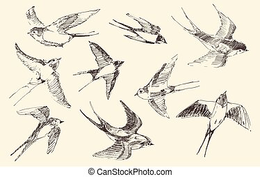 Swallows Flying Bird Vector, Hand Drawn, Sketch - Swallows...