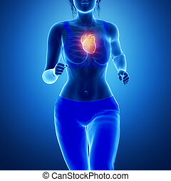 Healthy lifestyle oncept - running woman with heart