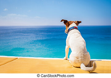 dog relaxing - dog watching the summer vacation view on the...