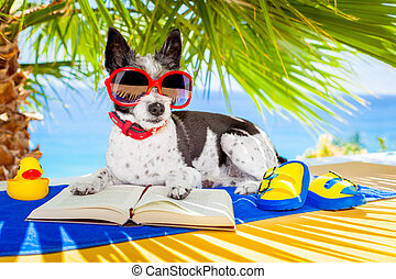 dog reading - terrier dog reading a book and relaxing under...