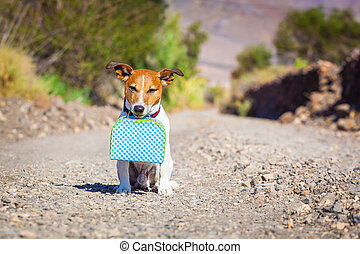 abandoned and lost dog - jack russell dog abandoned and left...