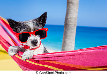 dog summer hammock - black terrier dog relaxing on a fancy...