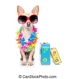 dog summer holidays - chihuahua dog with bags and luggage or...