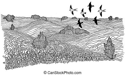 Swallows over Hills - Barn and Tree Swallows over Hills...