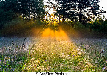 rural landscape with the sun beams on a meadow - beautiful...