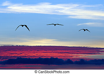 Birds Flying Silhouette - Birds flying silhouette with a...