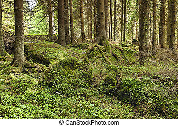 The primeval forest - HDR - The primeval forest with mossed...