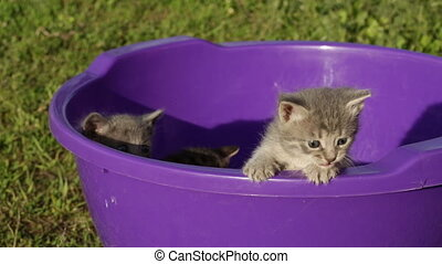 Little kitten playing outdoors - Little tabby kittens in...