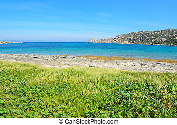 green vegetation by the sea in Gallura, Sardinia