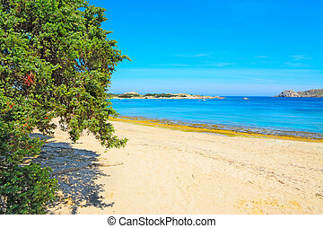 pine tree by the shore in Capo Testa, Sardinia